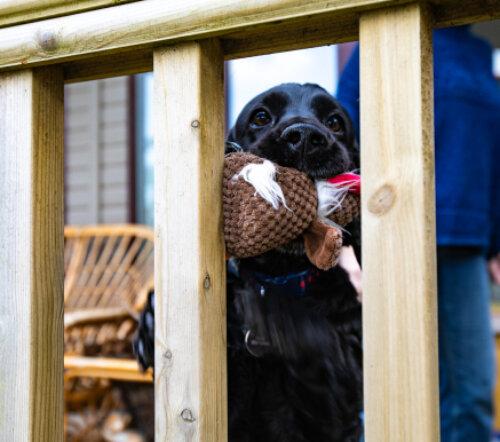 Holiday Pet Friendly Holiday Homes Lodges
